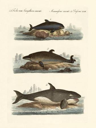 Kinds of Whales