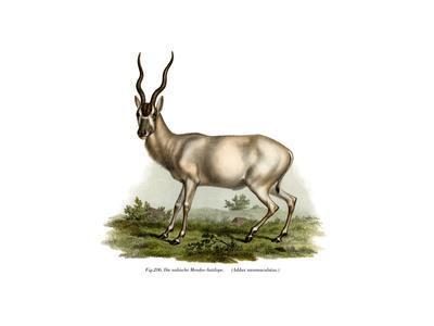 Adadax, 1860