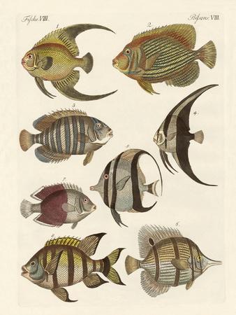 Rare Indian Fish