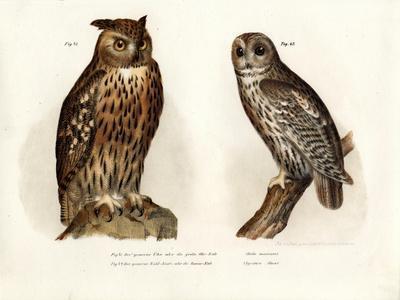 Eagle Owl, 1864