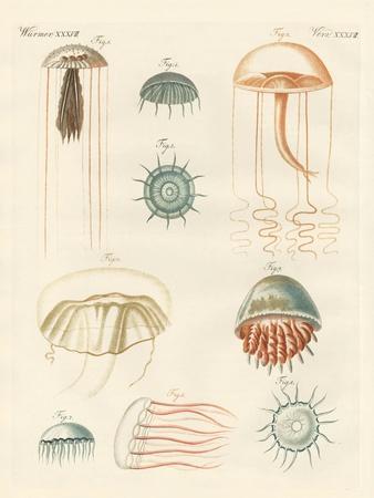 Strange Medusas