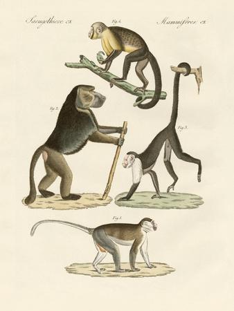 Strange Monkeys