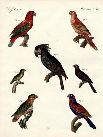 Strange Parrots