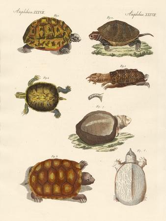 Strange Turtles