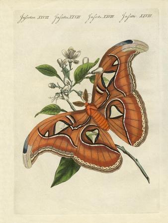 Chinese Butterflies