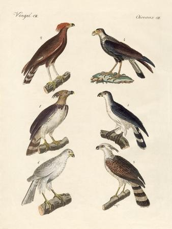 Strange Eagles