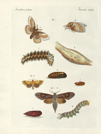 Harmful Butterflies