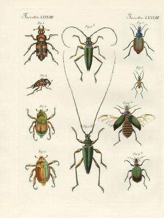 Beatiful Beetles