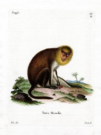 Monk Saki