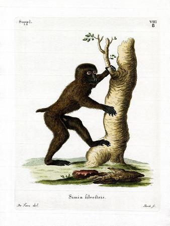 Wood Baboon