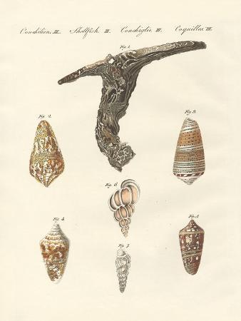 Rare Shells