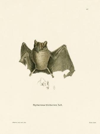 Ipanema Bat