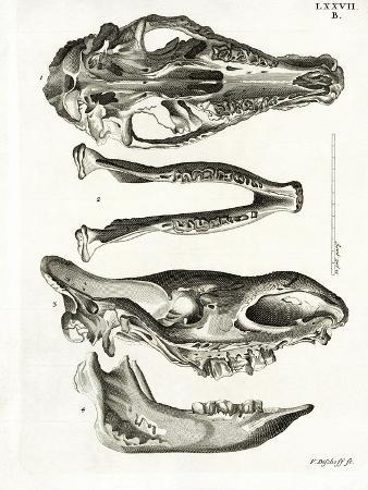 Jaw Bones