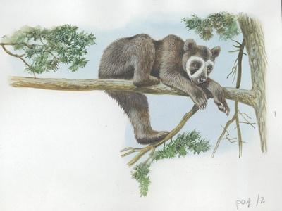 Spectacled Bear Tremarctos Ornatus Climbing Tree