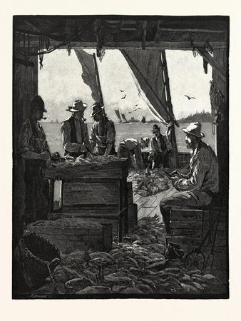 Preparing Fish for Market, Canada, Nineteenth Century