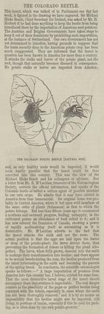 The Colourado Potato Beetle