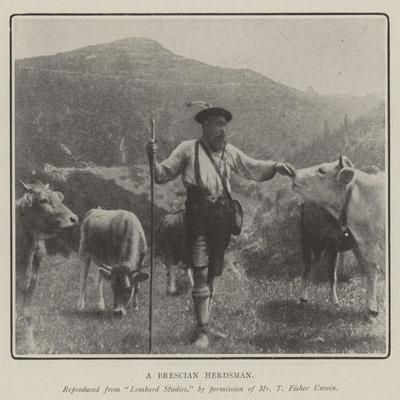 A Brescian Herdsman