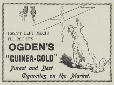 Advertisement, Ogden's Guinea-Gold Cigarettes