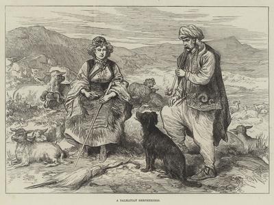 A Dalmatian Shepherdess