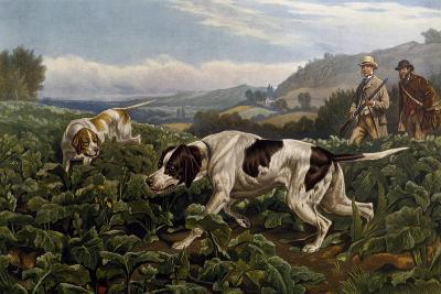 Partridge Hunting, 1880, by Basil Bradley (1842-1904)