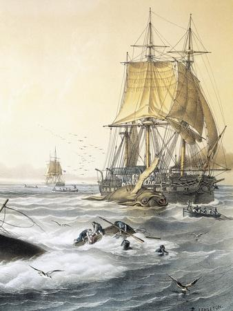 Whaling in South Seas