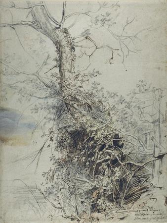 A Dying Tree, its Trunk Covered with Brambles, Beside a Fence, C.1618-20