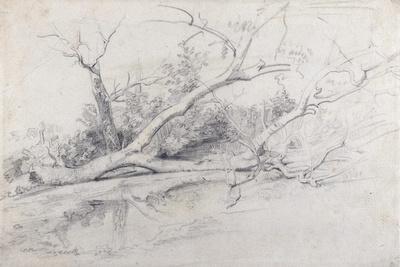 A Fallen Tree Lying by a Pool, C.1630
