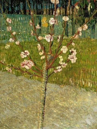 Almond Tree in Blossom, 1888