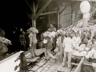 Unloading Bananas, Mobile, Ala.