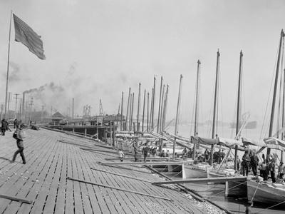 Oyster Luggers at the Levee, New Orleans