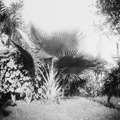 Cuban Foliage