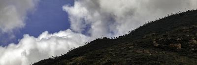 Cumulus Clouds Above a Mountain-Top Forest Near Mount Kulal Biosphere Reserve, and Lake Turkana