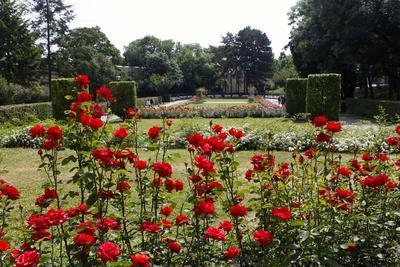 The Rose Garden on Petrin Hill