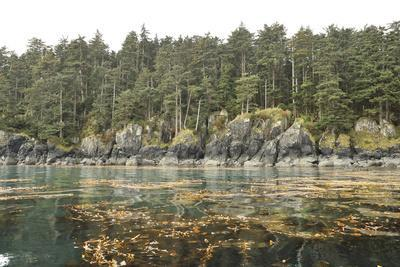 Kelp Beds Line the Rocky Forested Shore of Sgang Gwaay