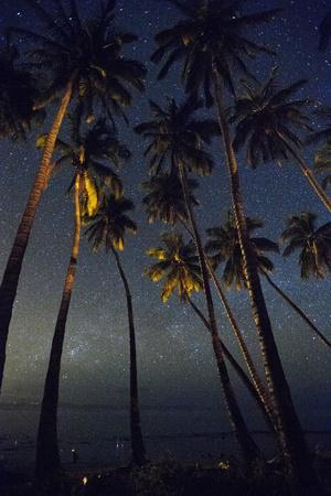 Starry Night in the Kapuaiwa Coconut Grove, Molokai