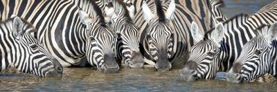 Burchell's Zebras (Equus Quagga Burchellii) at Waterhole, Etosha National Park, Namibia