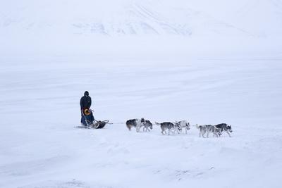 Husky Dog Sled in Adventdalen Valley