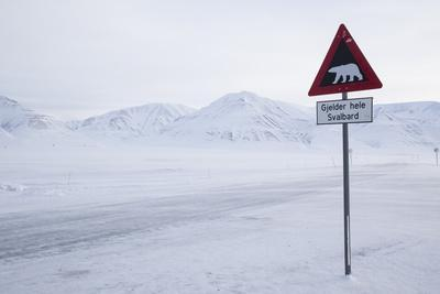 Beware of Polar Bear Traffic Sign on Ice Road
