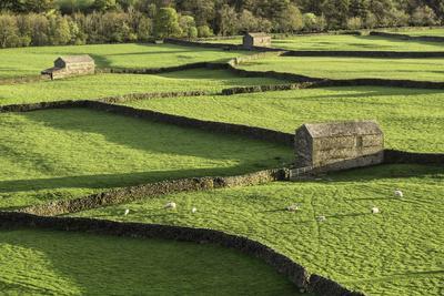 Barns and Dry Stone Walls at Gunnerside