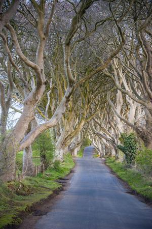 The Dark Hedges in Northern Ireland, Beech Tree Avenue, Northern Ireland, United Kingdom