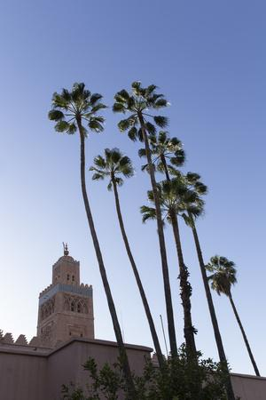 Minaret of Koutoubia Mosque with Palm Trees, UNESCO World Heritage Site, Marrakesh, Morocco