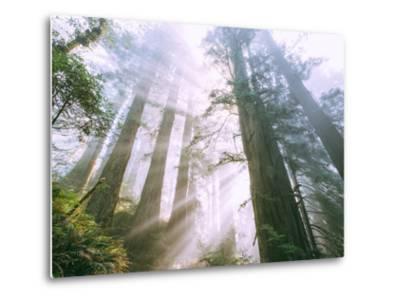 Light Source, Del Norte Coast Redwoods, California Coast, Humboldt