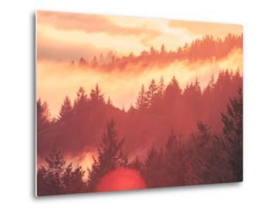 Sun Burned Fog Mount Tamalpais, Marin County, San Francisco