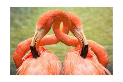 Flamingo Hug