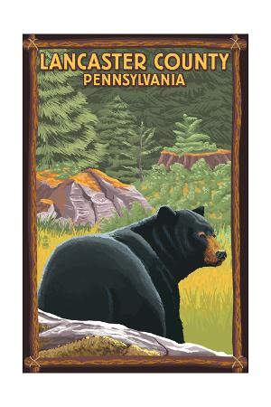 Lancaster County, Pennsylvania - Black Bear in Forest