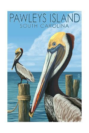 Pawleys Island, South Carolina - Pelicans