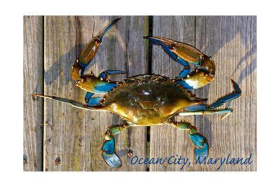 Ocean City, Maryland - Blue Crab on Dock