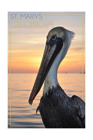 St. Marys, Georgia - Pelican