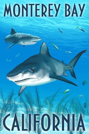 Monterey Bay, California - Tiger Sharks