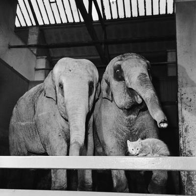 Belle Vue Zoo, 1962